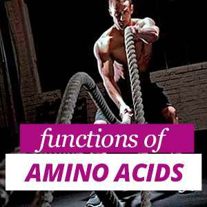 Functions of Amino Acids in the organism