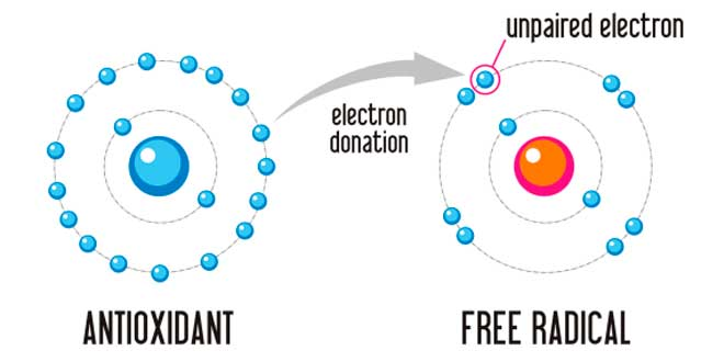 The effect of antioxidants