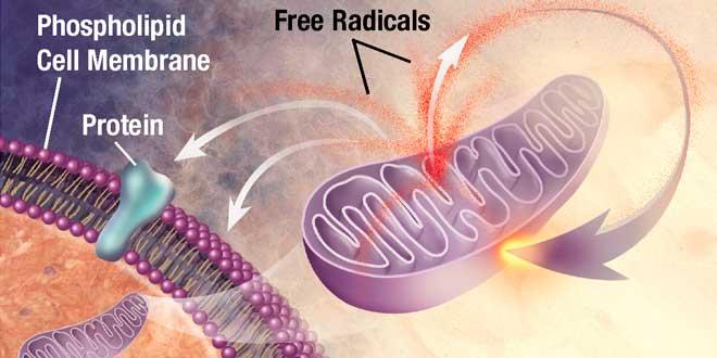 The effect of reactive oxygen species