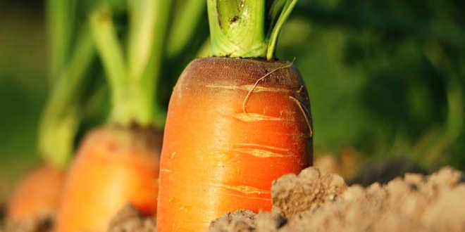Carrots Vitamin A